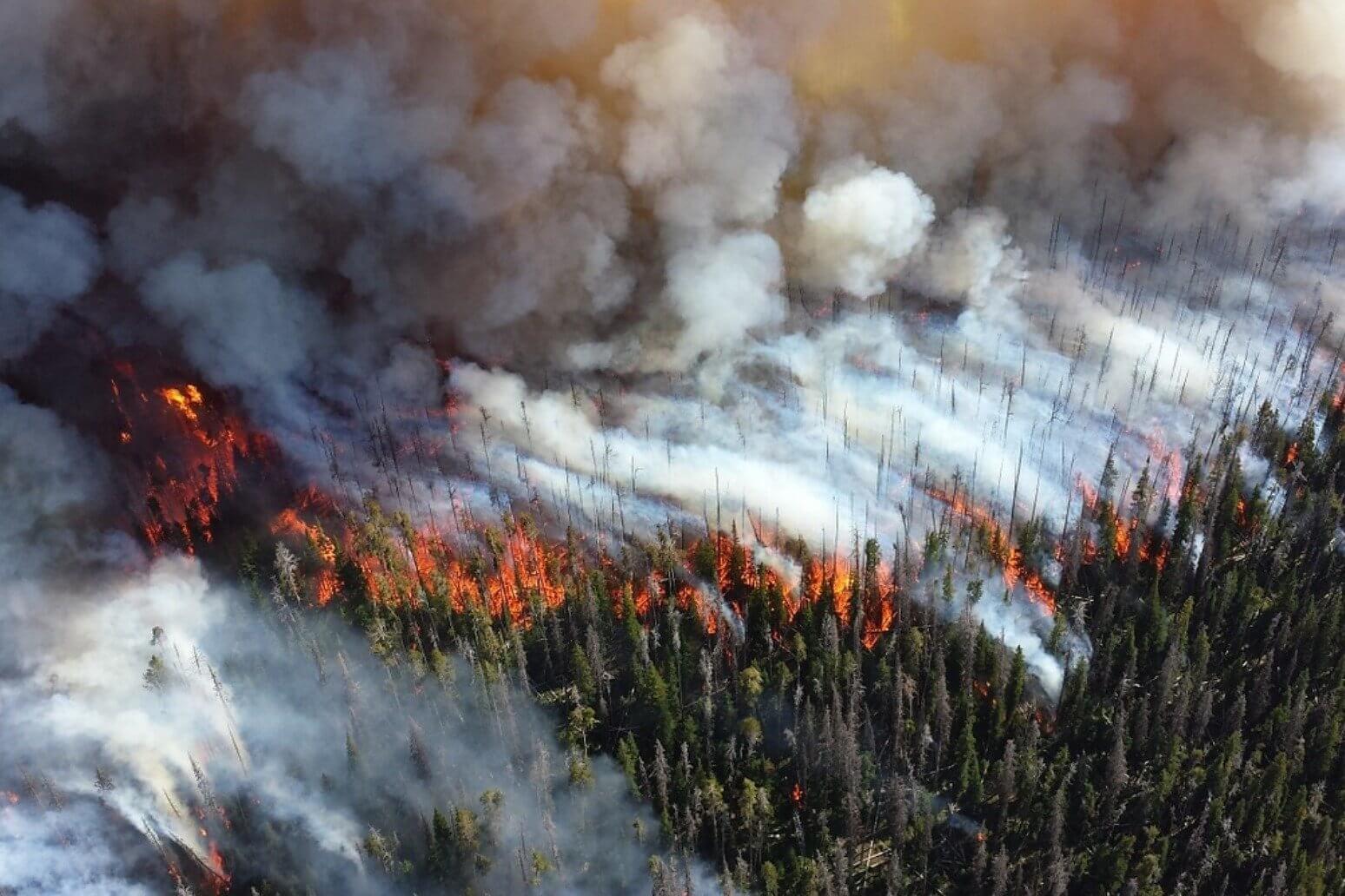 Лесные пожары в России