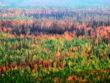 Лесные пожары в тайге